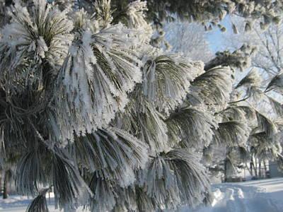Pine Needles Photograph - Furry Fir by Toni Jackson