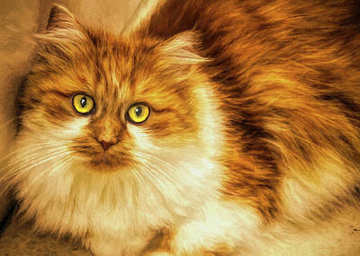Painting - Furry Kitty - Painting by Ericamaxine Price