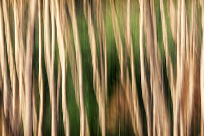 Abstract Movement Photograph - Furtive by Todd Klassy