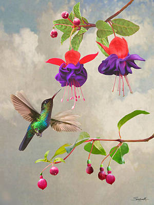 Digital Art - Fuchsia And Hummingbird by Spadecaller