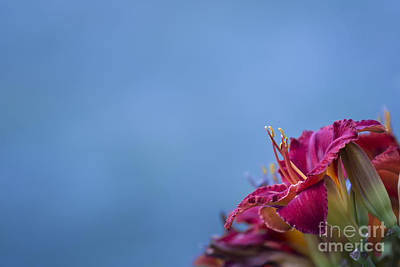 Photograph - Fuchsia On Blue by Andrea Silies