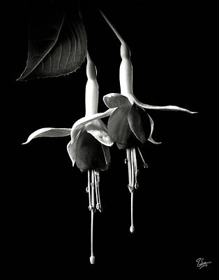 Photograph - Fuschias In Black And White by Endre Balogh