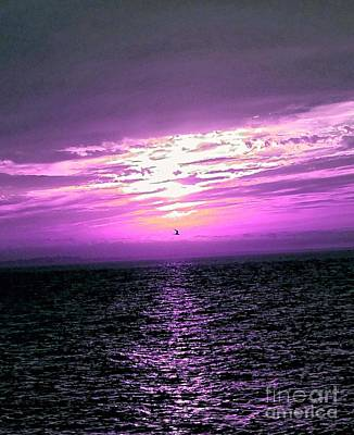 East Sandwich Photograph - Fuschia Sunset by Christine Chepeleff