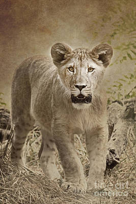 Photograph - Future King by Sonya Lang