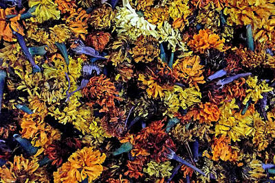 Photograph - Future Marigolds by Harold Zimmer
