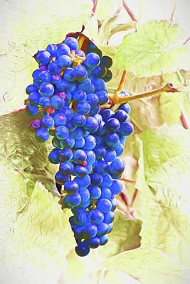 Wine Photograph - Future Vino by Marcia Colelli