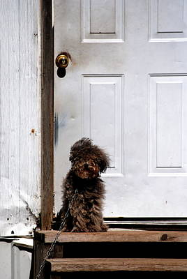 Photograph - Fuzzbutt And The Old Door by Emily Stauring