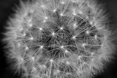Photograph - Fuzzy - Black And White by Angela Rath