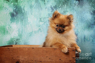 Fuzzy Digital Art - Fuzzy Dog by Angel McCoy