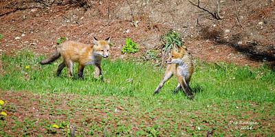 Photograph - Fuzzy Fox Kits by Peg Runyan