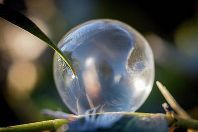 Photograph - Fuzzy Frozen Bubble by Crystal Wightman