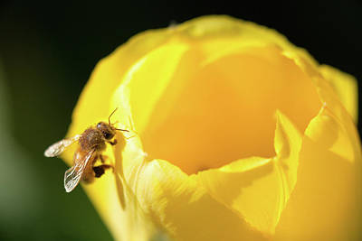 Photograph - Fuzzy Pollen by Brian Hale