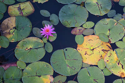 Photograph - Fx1m-71 Lilly Pads by Ohio Stock Photography