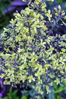 Photograph - Fx21m-22 Wegerzyn Gardens Metropark by Ohio Stock Photography