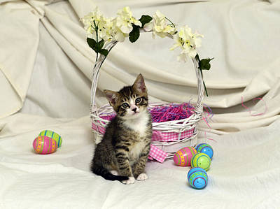 Photograph - Gabby And Easter Basket #2 by Cindy McIntyre