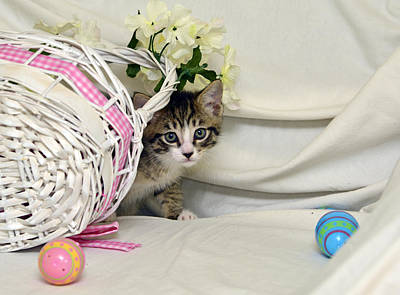 Photograph - Gabby And Easter Basket #9 by Cindy McIntyre