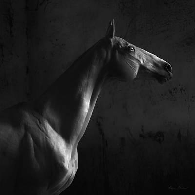 Konik Photograph - Gagur by Artur Baboev