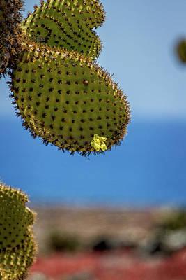 Photograph - Galapagos Prickly Pear by John Haldane