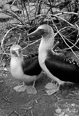 Photograph - Galapagos_102-2 by Craig Lovell