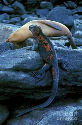 Photograph - Galapagos_102-4 by Craig Lovell