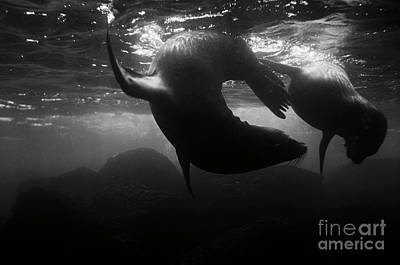 Photograph - Galapagos_55-11 by Craig Lovell