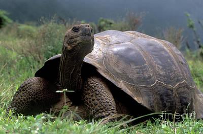 Photograph - Galapagos_57-7 by Craig Lovell