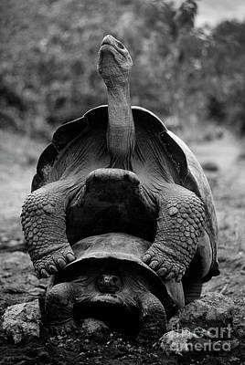 Photograph - Galapagos_69-3 by Craig Lovell