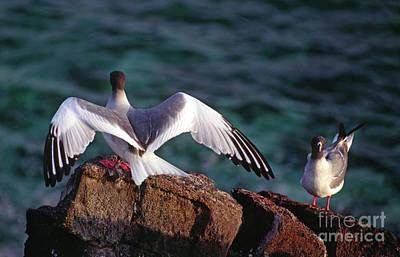 Photograph - Galapagos_88-16 by Craig Lovell