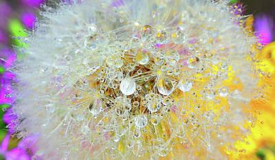 Dandelion Digital Art - Galaxy by Yuri Hope