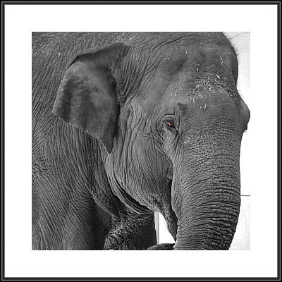 Photograph - Gallery Image - Animals by Richard Reeve