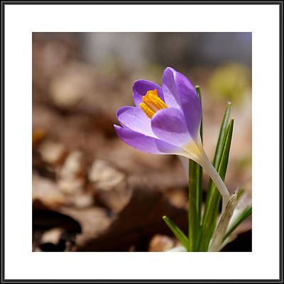 Photograph - Galley Image - Spring by Richard Reeve