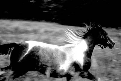 Photograph - Gallop In Contrast by Emily Stauring