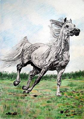 Art Print featuring the drawing Galloping Arab Horse by Melita Safran