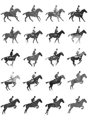 Gelding Drawing - Galloping Gait Terrestrial Locomotion - Bw by Aged Pixel
