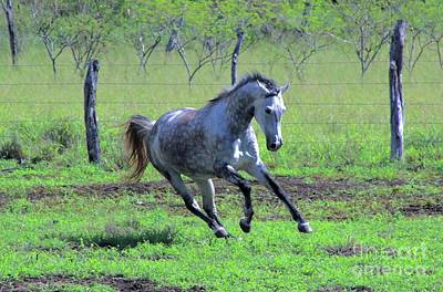 Photograph - Galloping In The Pasture by Craig Wood
