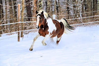 Galloping In The Snow Art Print by Elizabeth Dow