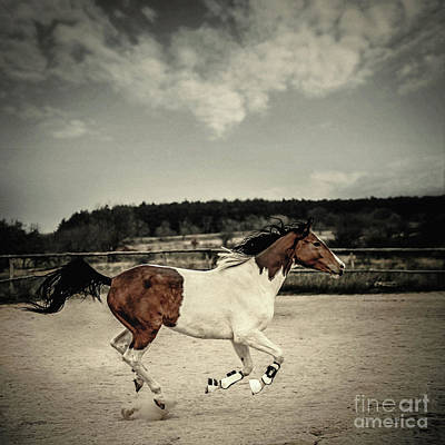 Photograph - Galloping Paint Horse by Dimitar Hristov
