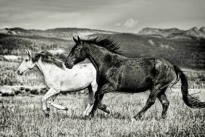 Photograph - Galloping Through The Scenery In Black And White by Kay Brewer