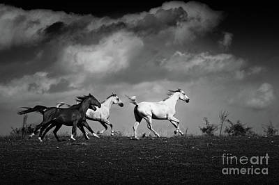 Photograph - Galloping White Horses Black And White by Dimitar Hristov