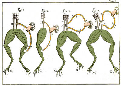 Galvanis Frog Experiments, 18th C Art Print by Science Source