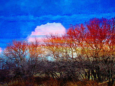 Photograph - Gambel Oaks Aslumber In April Breeze Mancos Colorado by Anastasia Savage Ealy