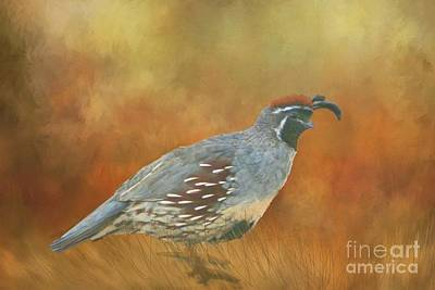 Photograph - Gambel Quail In Death Valley  by Janette Boyd