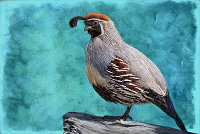 Painting - Gamble Quail's Backdrop In Teal by Barbara Chichester