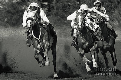 Photograph - Gambling Horses by Dimitar Hristov