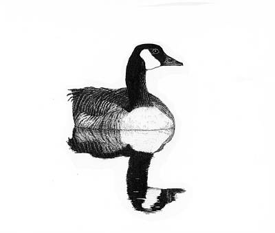 Drawing - Gander by Timothy Livingston
