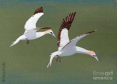 Gannets - Painting Art Print by Veronica Rickard
