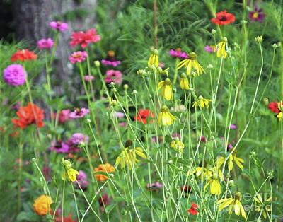 Photograph - Garden 2 by Lizi Beard-Ward