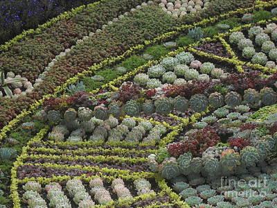 Photograph - Garden 4 by Reina Resto