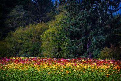 Of Dahlia Photograph - Garden And Forest by Garry Gay