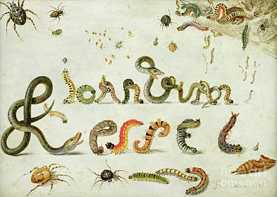 Nature Study Painting - Garden And Other Spiders, Caterpillars Spell The Artist's Name, 1657 by Jan Van Kessel